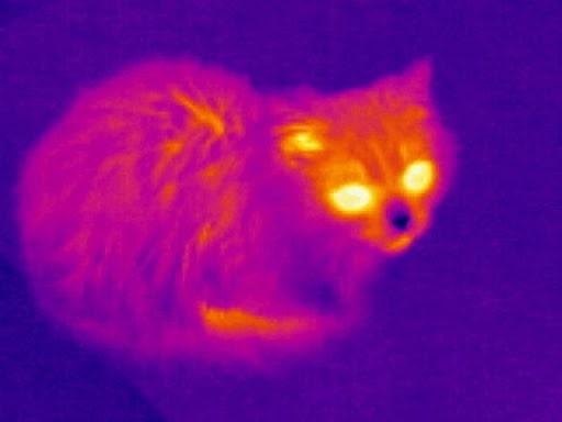 Wärmebildtechnologie für den Jagdmarkt